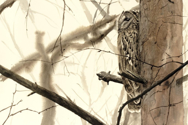 chouette_hulotte_arbre_1000px