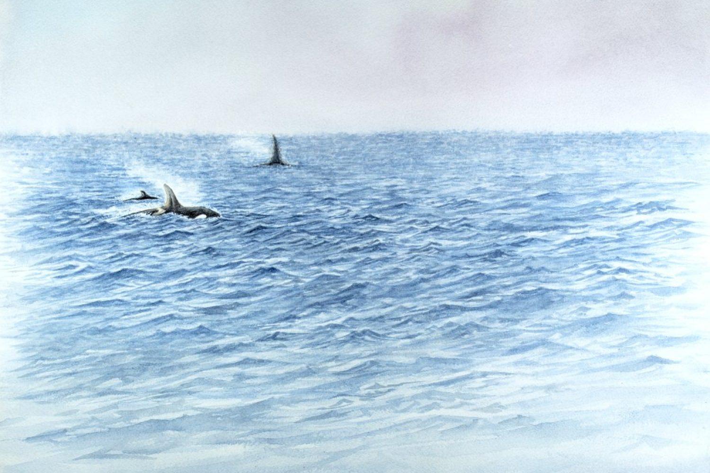 orques_lista_1000px